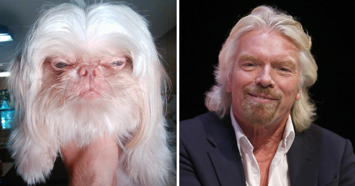 Dogs That Look Like Something Else. Or someone :)