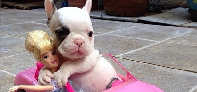 The 18 Most Important Milestones Of Every Puppy's Life!
