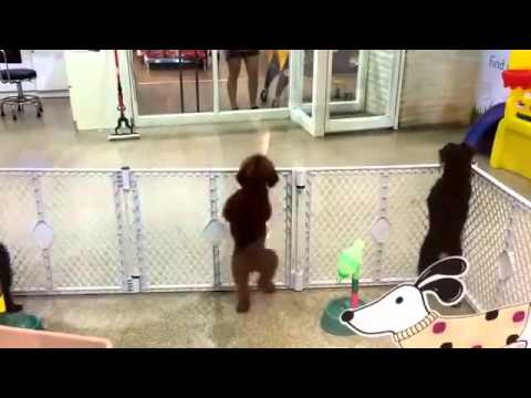 Awesome dancing puppy