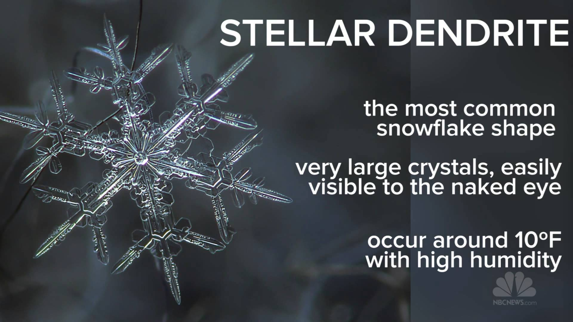 Anatomy of a snowflake