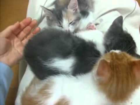 3 kittens are asleep, cozy, but when you take one… surprise!