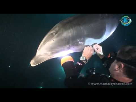 Another proof of the special bond between dolphins and humans