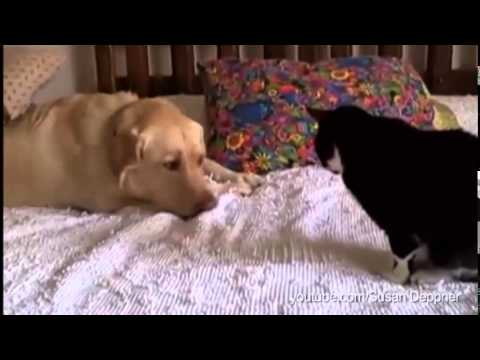To contradict the cats and dogs myth