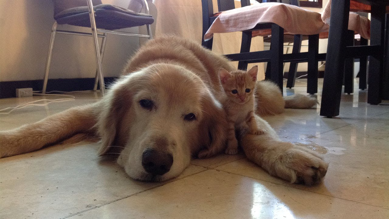 From abandoned kitten to best friend