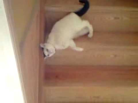 What a weird going down the stairs!!!