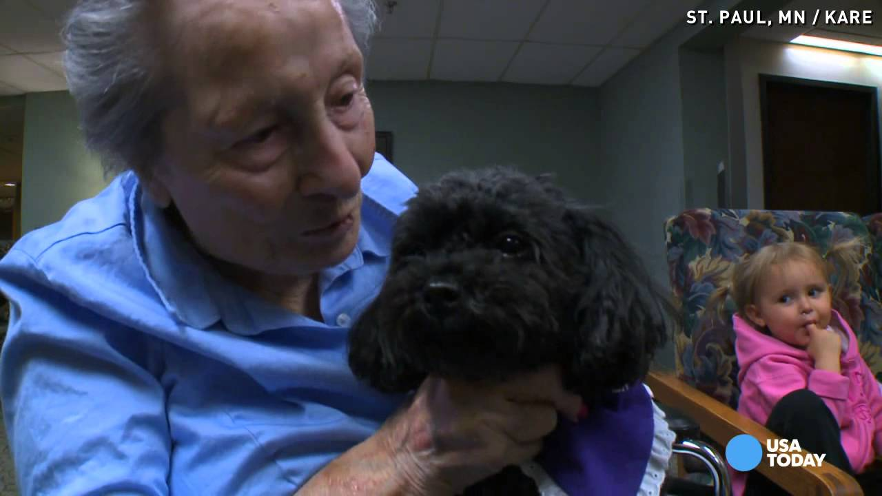 Nala, the little poodle that makes magic with the elderly