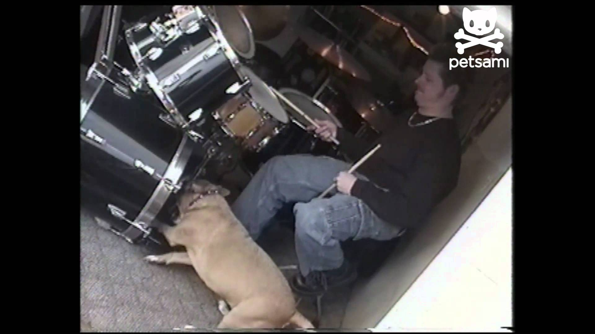 Pacey, the drummer dog!