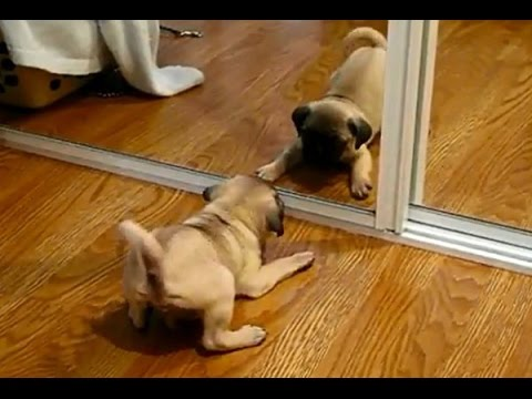When animals look at a mirror!