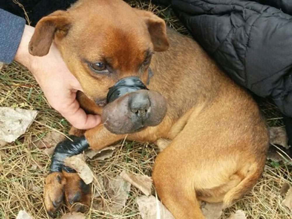 Abused dog left to die a slow death…